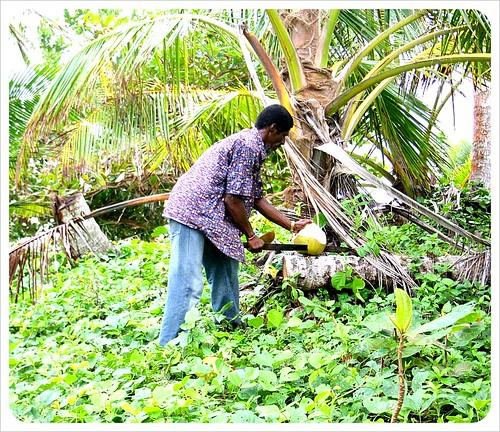 Frank cutting coconuts on Little Corn Island