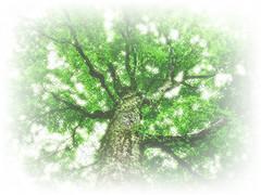[フリー画像] 自然・風景, 樹木, 白神山地, 世界遺産, 日本, 201104080700