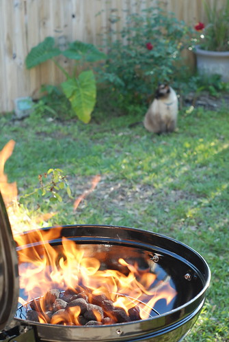 the grill and the cat