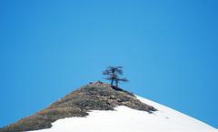 Pareja (Valter49) Tags: trees italy mountain snow alberi italia arboles nieve neve montagna valter abigfave valter49 allegrisinasceosidiventa mygearandme mygearandmepremium