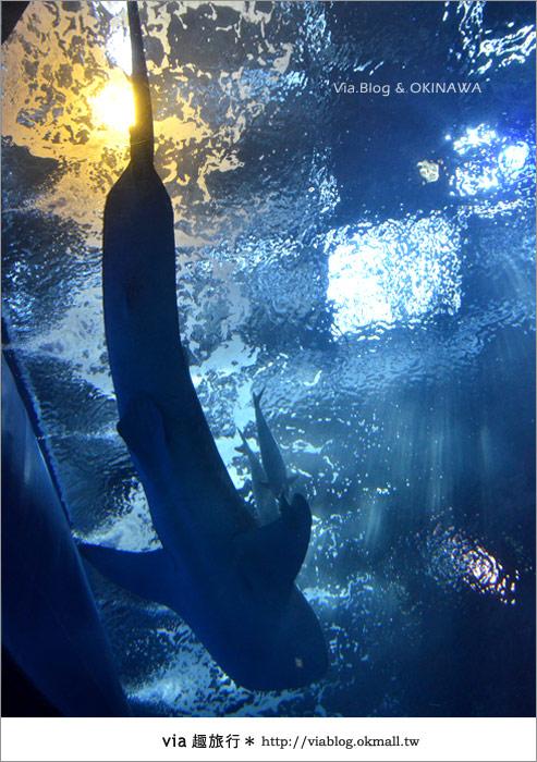 【沖繩景點】美麗海水族館~帶你欣賞美麗又浪漫的海底世界!35