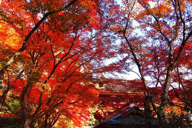20101119_140419_室生寺