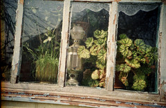 lomo_sw_22 (mariczka) Tags: plants reflection film window analog garden spring lomo lomography mother april curtains samovar borrowedcamera fujicolorsuperia200 sovietcamera svitlovodsk mymomsplace vintageanalogue