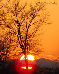 Mystical Sundown (**Ms Judi**) Tags: sunset sun tree wisconsin clouds golden branches country flare lovely magical powerful godscountry enchanting godsgift msjudi beautifulgift judistevenson judippc photographybymsjudi mysticalsundown wisconsinsunsetpeahtigowisconsin