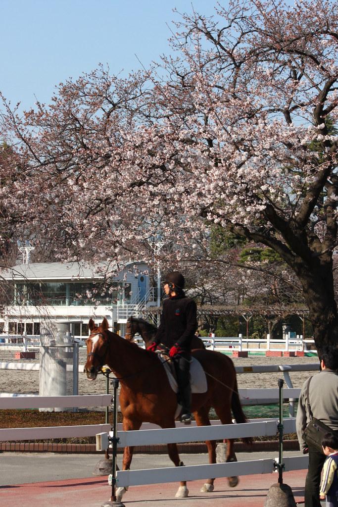 Sakura Photo 2011Bajikouen (15)