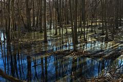 Slanting Light (lollopins) Tags: massachusetts newengland milton reflexions bluehills bluehillsreservation neponsetriverreservation