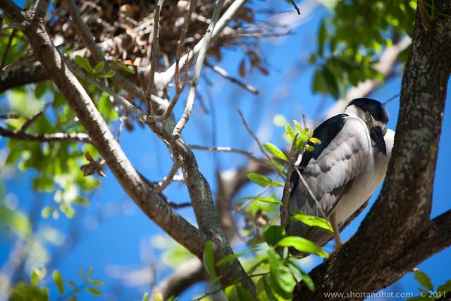 Seabird Sanctuary