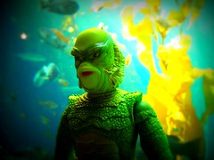 Fish Face (8 Skeins of Danger) Tags: fish montereybayaquarium kelp creaturefromtheblacklagoon creech gillman 8skeinsofdanger