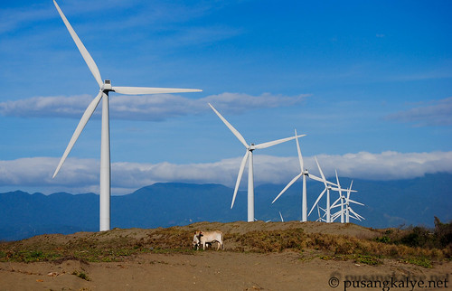 cows and bangui windmills