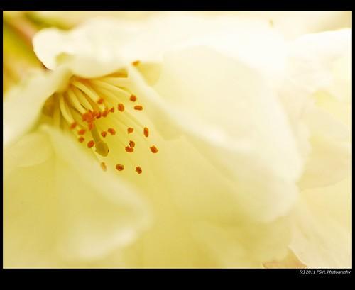 Blossom Flower Close-Up