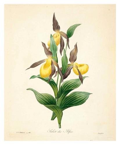 007-Pezuña de los Alpes-Choix des plus belles fleurs…1827- P.J.Redoute
