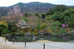 DSC_0046-2 (yhshangkuan) Tags: japan spring kyoto blossom arashiyama bloom  cherryblossom sakura    fullbloom 2011 tenryujitemple