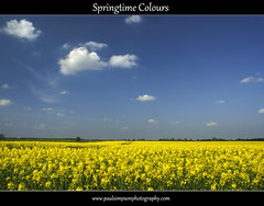 Blue and yellow view (Paul Simpson Photography) Tags: uk summer england nature colors landscape countryside farm bluesky farmland pollen agriculture springtime rapeseed fluffyclouds naturephotos northlincolnshire springcolors springcolours rapeseedfields coloursofnature poloriser sonya700 photosofnature paulsimpsonphotography flickrstruereflection1
