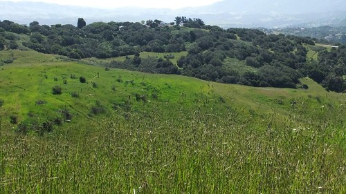 Green rolling hills @ the Sea Otter demo loop