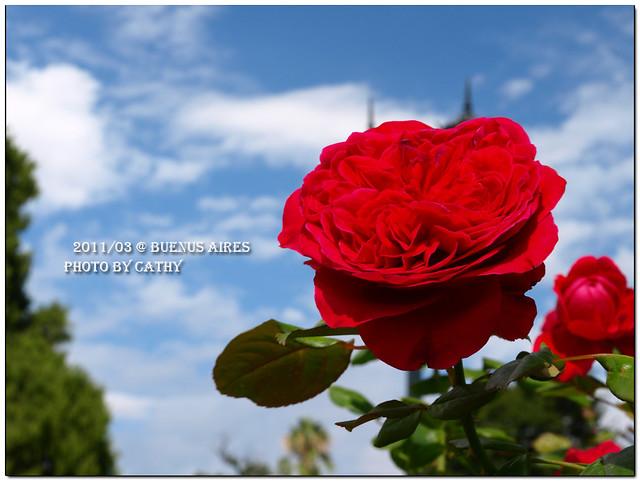 rose plaza-1