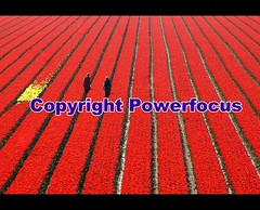 Lost in an Ocean of red....gives their Work colour (powerfocusfotografie) Tags: flowers ladies people favorite holland tourism colors field lines work interesting workers nikon colours angle tulips farmers outdoor pov patterns pointofview international production groningen agriculture tulipfield henk redflowers redtulips inarow diseases landbouw favoriteflowers toerisme powerfocus fromallovertheworld favoritecolours 100commentgroup oceanofred
