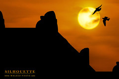 .. Dream vision (  || WALEED PHOTO) Tags: birds silhouette dream vision  waleed                         aljurish