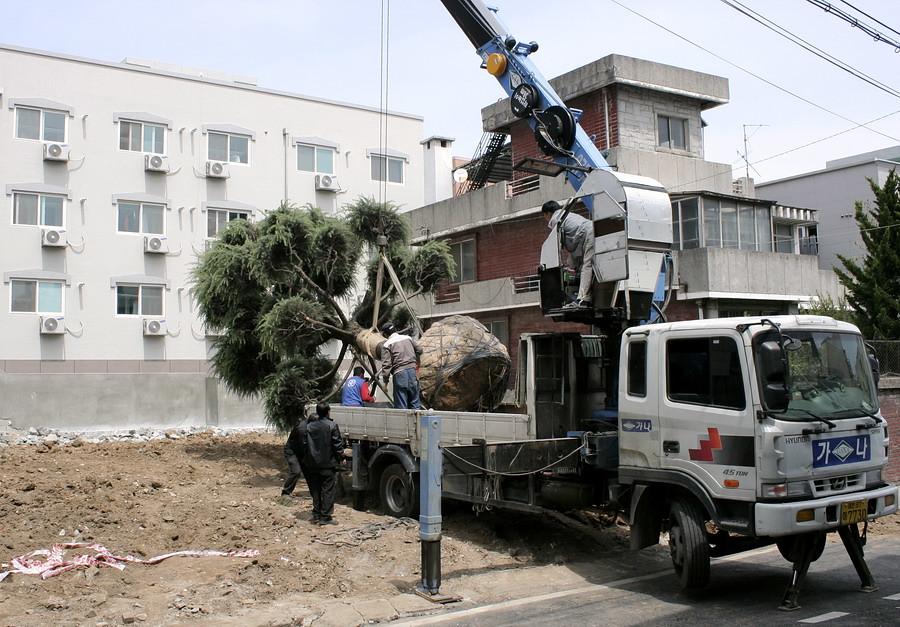 Saving Tree