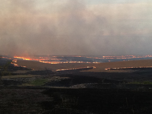 Controlled Burn on the Kansas Prairie