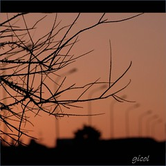 tell me... (gicol) Tags: light sunset italy tree silhouette arbol atardecer italia tramonto branch dof br illumination albero salento lampioni rami brindisi faroles