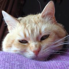 ciccio (archifra -francesco de vincenzi-) Tags: italy cat square chat colore gato gatto ritratto ciccio micio molise isernia greatphotographers kartpostal flickraward archifraisernia francescodevincenzi friendsofzeusphoebe mygearandme