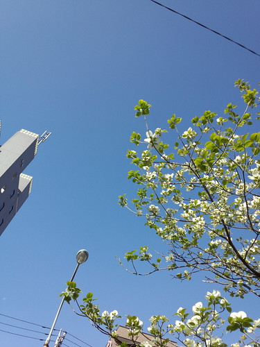 ほんといい天気。青空。
