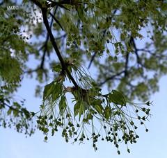 Drizzle (AlexRuz) Tags: sun green wet rain birds happy spring earth birth joy warmth growing worms finally