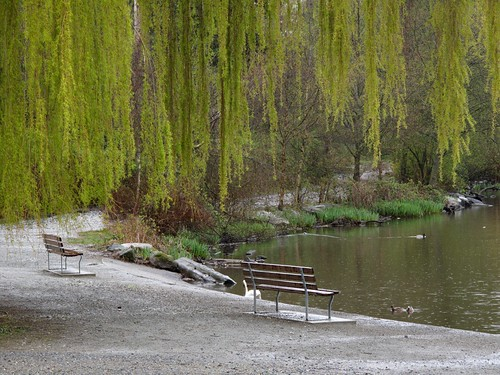 Empty Benches by the Lagoon
