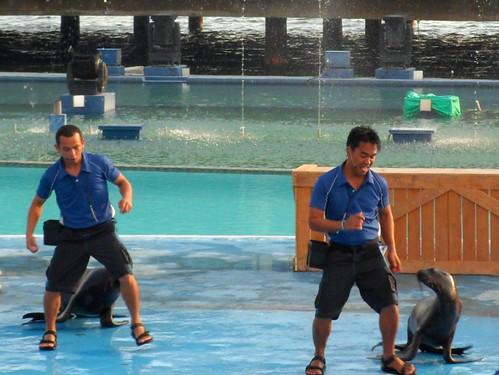 Manila Ocean Park:  Sea Lion Show