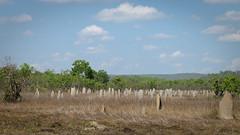 Termiten Siedlung