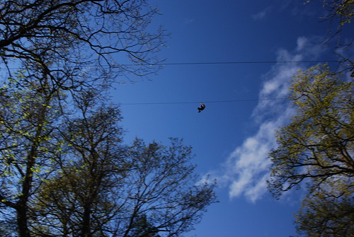 Zip wire in Achray Forest
