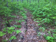 Trench Trail