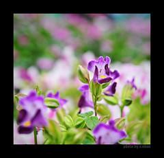 Like a dream! (e.nhan) Tags: pink flowers light flower art nature closeup landscape colorful colours dof bokeh arts enhan