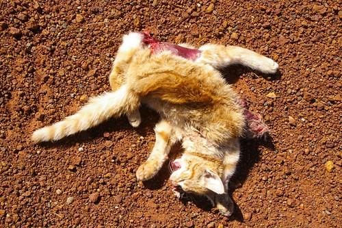 岩合光昭の世界ネコ歩き 9 [転載禁止]©2ch.net YouTube動画>3本 ->画像>148枚