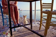 I wish I was a fisherman (Kyre Wood) Tags: me girl cat boats island fishing legs chairs pentax harbour pussy aegean kitty blues super greece fishermans taverna paros rickety waterboys