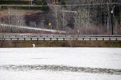 _SFP8894a (lavantage.qc.ca) Tags: rivière mitis steangèle
