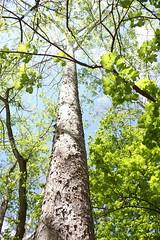 tall green trees