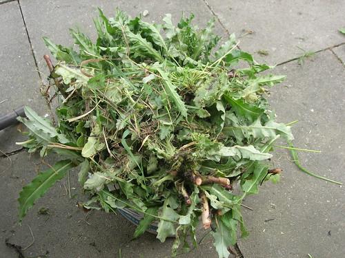 Distelpflanzen Bioabfall