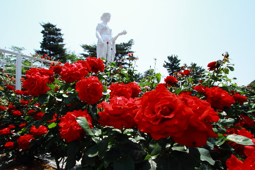 rose garden_5170