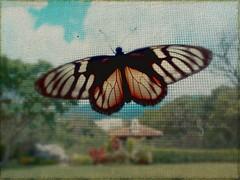 Mariposa....no? (choppyRocks…packing and moving!) Tags: canon butterfly powershot textures mariposa g12 bumpmap pareeerica choppyrocks