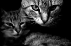Nin i Nina (Ferran.) Tags: cats cat nin gatos catalonia gato nina gat ripolles gats queralbs ldlportraits