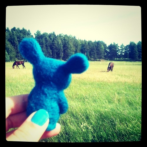 knut and horses
