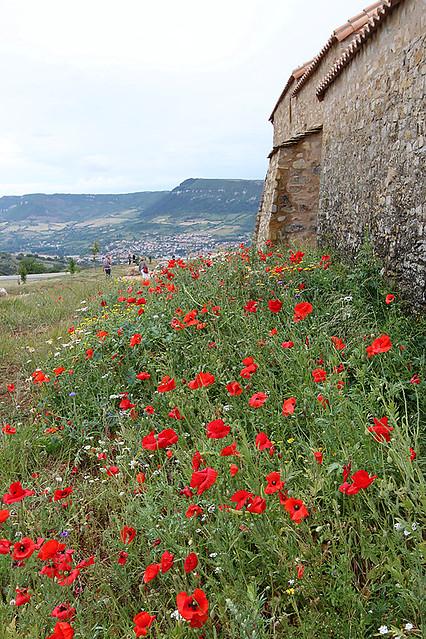 Montpellier16