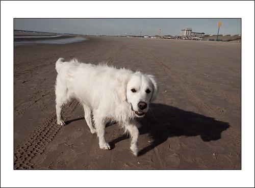 hond op strand by hans van egdom