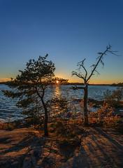 Autumn eve (Antti Tassberg) Tags: auringonlasku aurinko autumn evening fall helsinki ilta landscape laru lauttasaari shadow sun sundown sunset syksy twilight varjo uusimaa finland