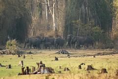 elephant herd ~ Nagarhole national park (LaylaLee) Tags: park india national gandhi karnataka rajiv