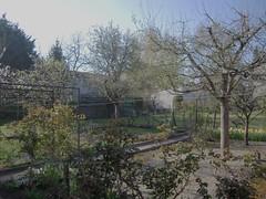 JARDIN CHARENTAIS (marsupilami92) Tags: jardin poirier prunier 16 charente sillac printemps cerisier pommier france frankreich poitoucharentes fleur angoulême rosier arbre jonquille
