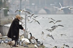 Bread for birds (Gilles San Martin) Tags: city urban food woman bird nature belgium human feed jambes botulism biotope
