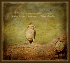 """A bird doesn't sing because it has an answer, it sings because it has a song."" ~ Maya Angelou (Az Karen...busy) Tags: tree bird texture spring branch sparrow cityart mayaangelou tatot lenabem"