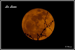 La Luna ... through the tree branches (Moniza*) Tags: moon luna celestial moniza